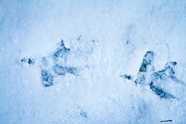 snowchickens-blogalacart-1