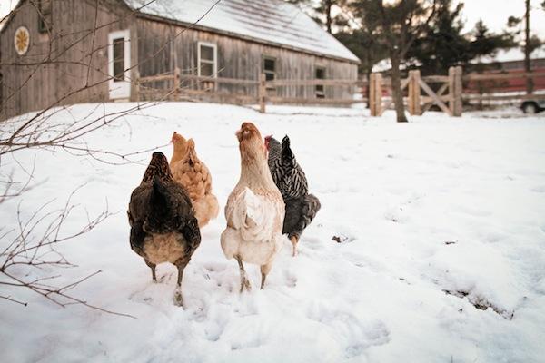 snowchickens-blogalacart-2