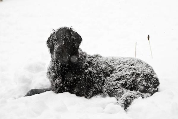 snowday-blogalacart-5