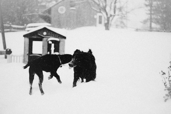 snow2013_blogalacart-2