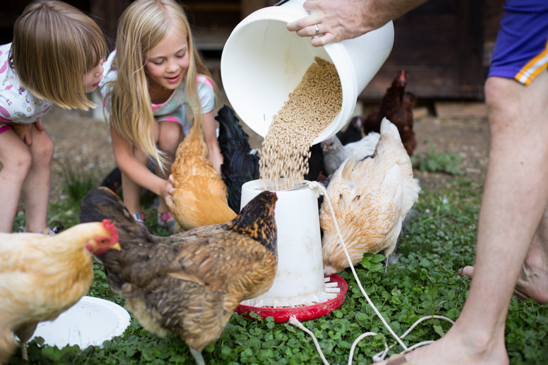 chickens_blogalacart-2