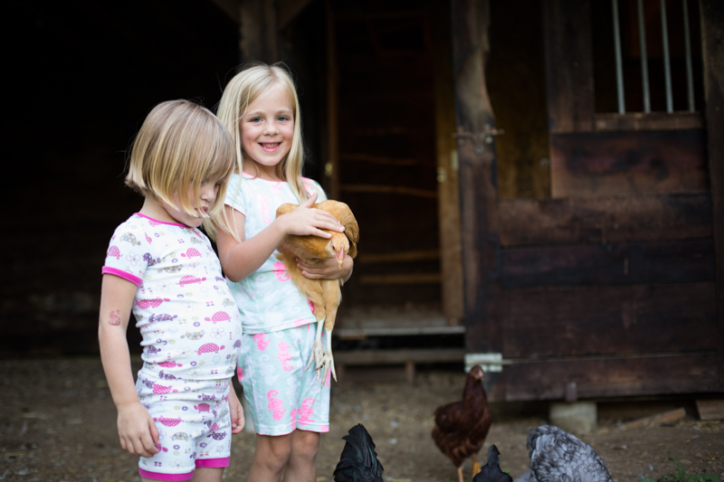 chickens_blogalacart-3