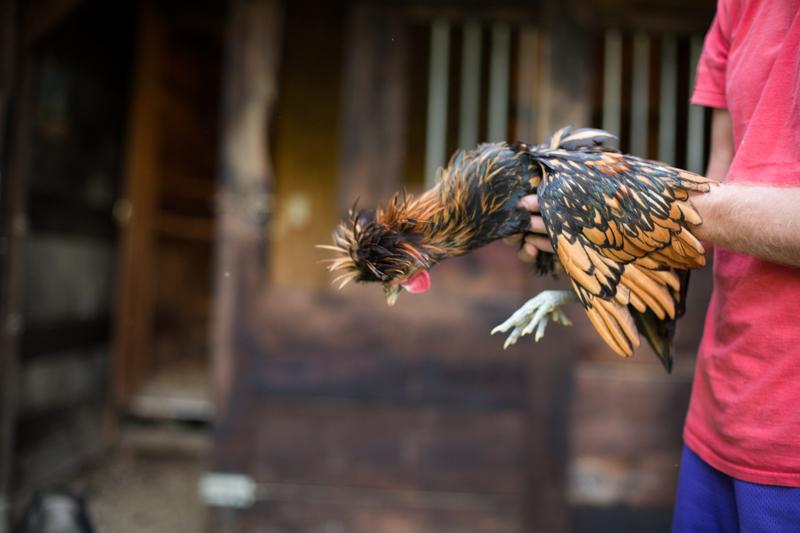 chickens_blogalacart-6