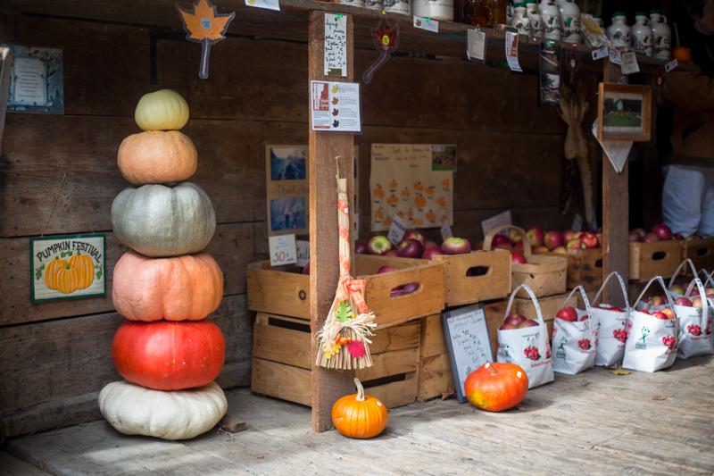 pumpkinpatch2015_blogalacart-1